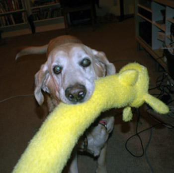 Chandler Bing (& Yellow Weiner Dog) in 2008. R.I.P., Mr. Bing! We Miss You!